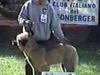Treviolo 8/04/2001