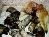 puppies-c1.jpg