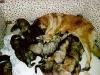 puppies-c3.jpg