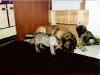 puppies-c5.jpg