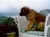 puppies-c26.jpg